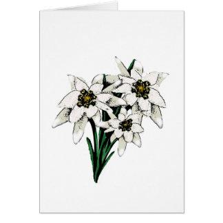 Edelweissの花 カード