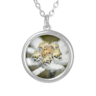 Edelweissの高山の花 シルバープレートネックレス