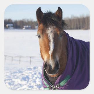 Ekeroの雪で覆われた分野で牧草を食べている馬 スクエアシール