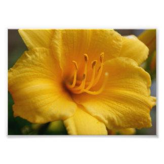 Elegentの黄色い5x7写真の印画 フォトプリント