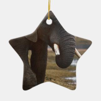 Elephand セラミックオーナメント
