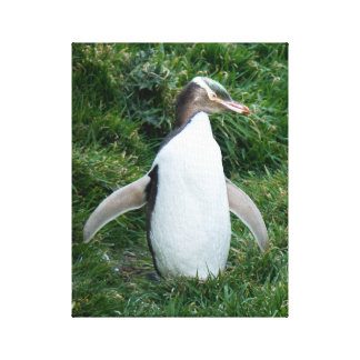 Endangered Yellow Eyed Penguin Canvas キャンバスプリント