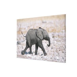 Etoshaの国立公園、ナミビア キャンバスプリント