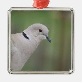 Eurasian Collared Dove Ornament メタルオーナメント