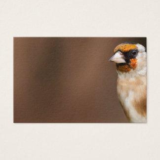 European goldfinch bird close up 名刺