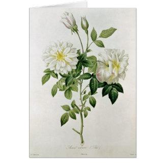 Eustache Hyacintheが刻むAime Vibere カード