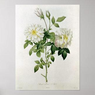 Eustache Hyacintheが刻むAime Vibere ポスター