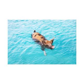 Exumaの水泳のブタ キャンバスプリント