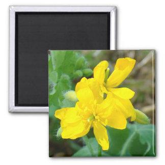 F0044黄色い野生の花の野生マスタード マグネット