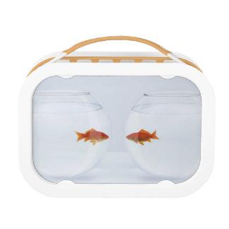 facに顔を見る別のfishbowlsの金魚 ランチボックス