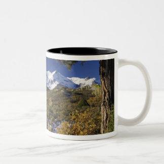 fallcolorのサンファン山および《植物》アスペンの木 ツートーンマグカップ