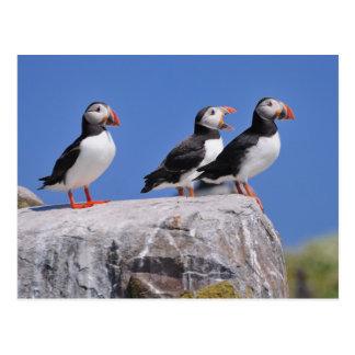 Farneの島の郵便はがきのツノメドリ ポストカード