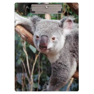 Featherdaleの野性生物公園、コアラ クリップボード