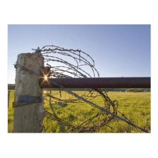 fencerowで近く転がられる有刺鉄線 ポストカード