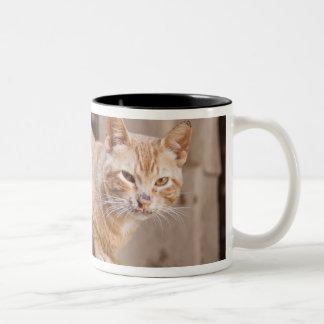 Fesマディーナ、モロッコ2の外部猫 ツートーンマグカップ
