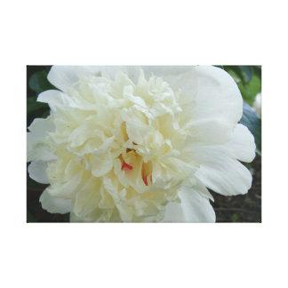 Festivaの最高純粋で白いシャクヤクの花 キャンバスプリント