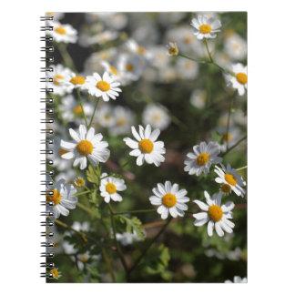 Feverfewの花(Tanacetumのparthenium)。 ノートブック