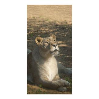 Fimaleのライオンの写真カード カード