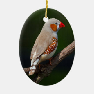 Finch Ornament氏 セラミックオーナメント
