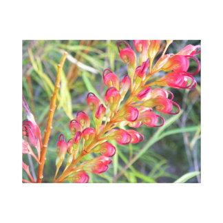 Firesprite Grevilleaの花 キャンバスプリント