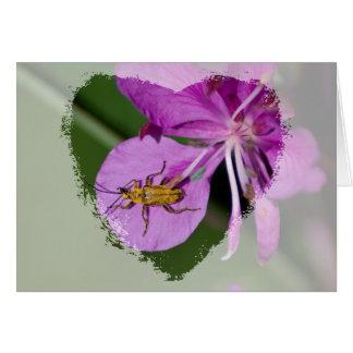 Fireweedの虫; 文字無し カード