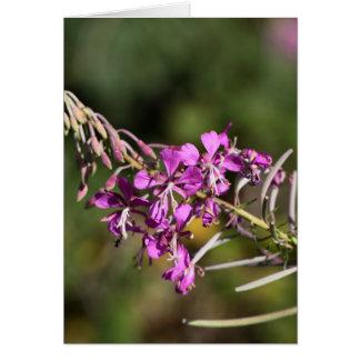 Fireweed カード