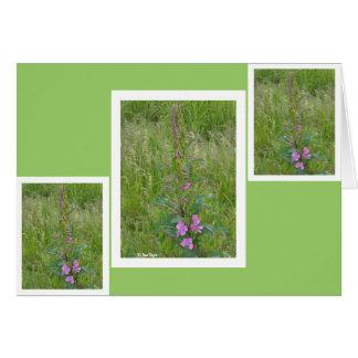 Fireweed #5 カード