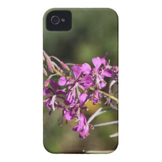 Fireweed Case-Mate iPhone 4 ケース