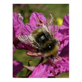 Fireweed、Unalaskaの島の蜂 ポストカード