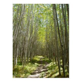 Flagstaffの《植物》アスペン ポストカード