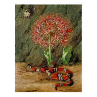 Flor Imperiale、珊瑚ヘビおよびくも、ブラジル はがき