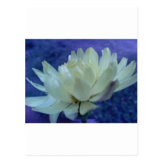 Flor.jpg ポストカード