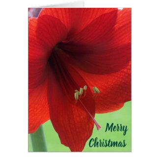 FloweのAmarylisのメリークリスマスの挨拶状 カード