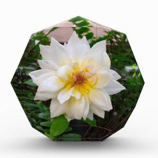 flower17 表彰盾