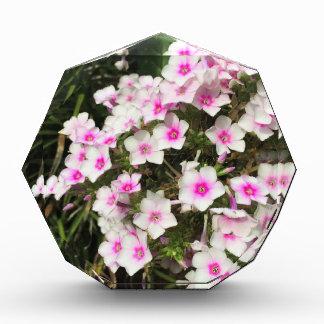 flower8 表彰盾