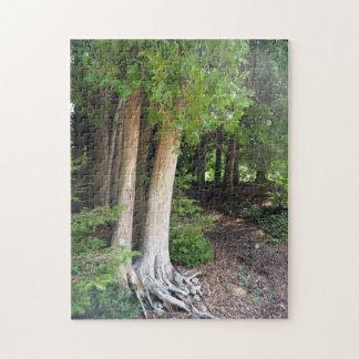 Forest Path 586 ジグソーパズル