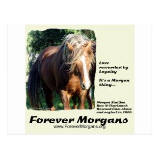 ForeverMorgansモーガンの種馬 ポストカード