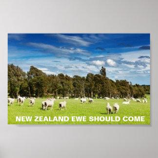 FOTCニュージーランドの雌ヒツジは来るべきです ポスター