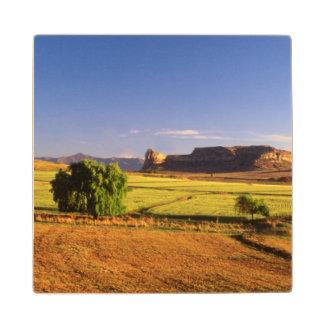 Fouriesburgの近くの小麦畑は、国家を解放します ウッドコースター