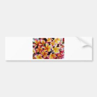 Frangipaniの花束 バンパーステッカー