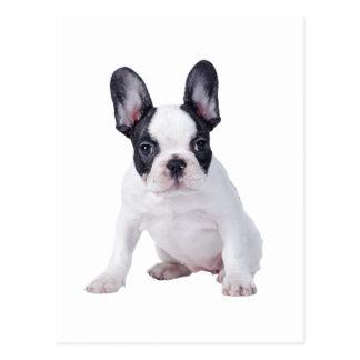 Frenchie -フレンチ・ブルドッグの子犬 ポストカード