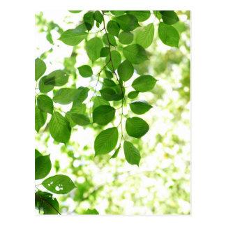 fresh green leaves ポストカード