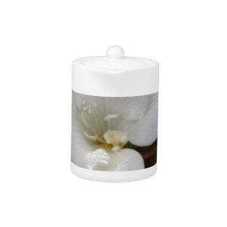 Fresiaの白い花