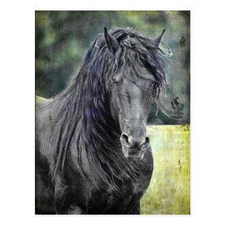 Friesianの種馬 ポストカード