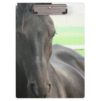 Friesianの馬 クリップボード