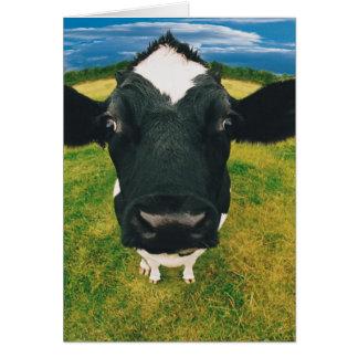 Friesian牛のHeadshot カード