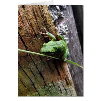 Froggy v カード