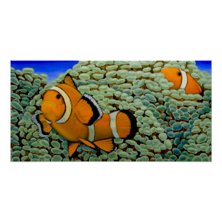Frogspawnの珊瑚のClownfish ポスター