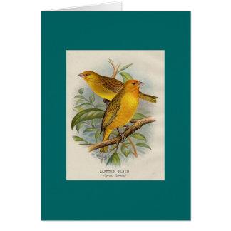 Frohawk -サフランのフィンチ カード