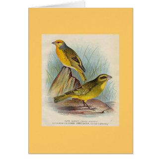 Frohawk -岬のカナリア及びSulpher頂点に達された種食べる人 カード